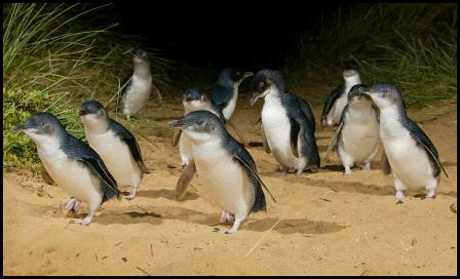 2535_night-penguins_web-copy.jpg